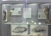 Relazione visita al museo di anatomia comparata dell for Talpa mammifero