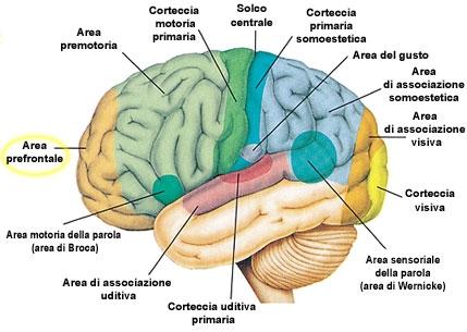 imagine cu cervello
