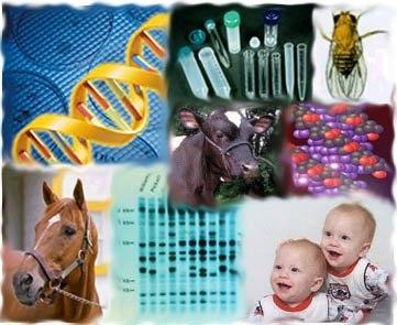La GENETICA e il DNA