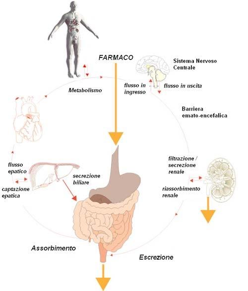 imagine cu metabolismo