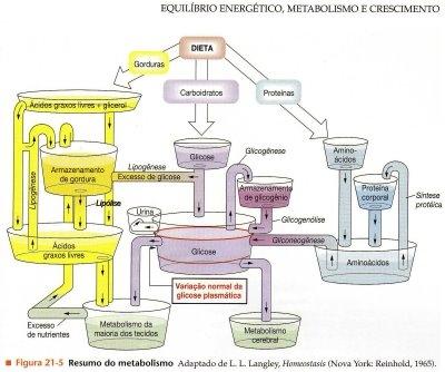 ENERGIA E METABOLISMO