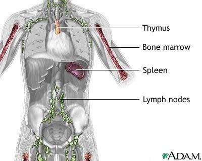 Apparato circolatorio - il sangue, i gruppi sanguigni, i vasi